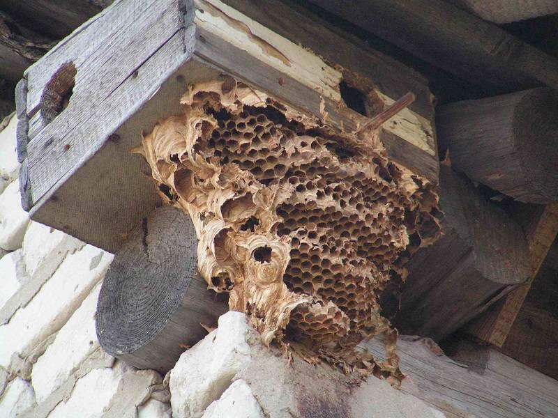 ✅ как можно избавиться от пчел на даче под крышей, как бороться с осами на участке - tehnomir32.ru