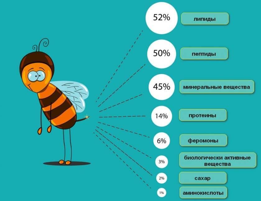 Пчелиный яд: полезные свойства, лечение апитерапией, действие на организм