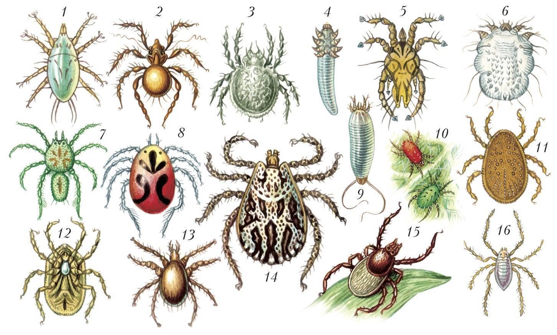Гнус — это двукрылые кровососущие насекомые