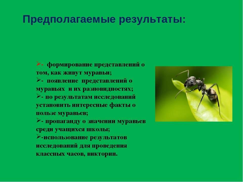 Муравьи: польза и вред, средства борьбы