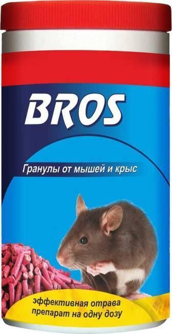 Чем травить крыс и мышей в домашних условиях