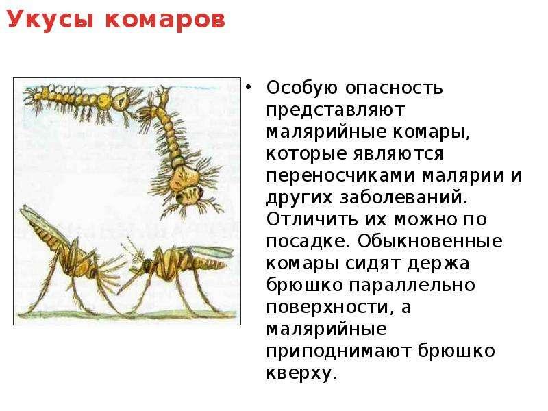 Укус малярийного комара и его последствия для человека | плюсы и минусы