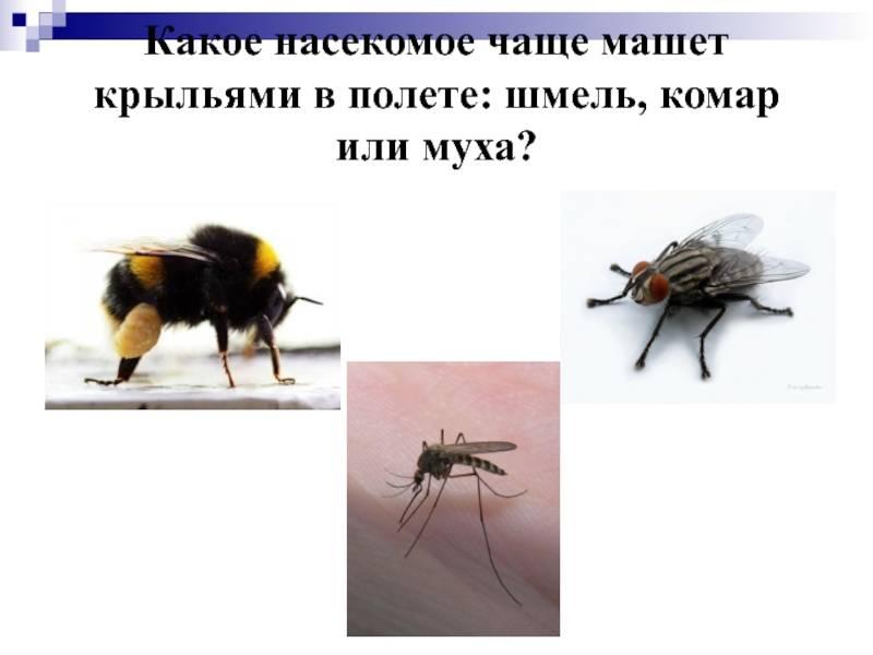Скорость полета комнатной мухи
