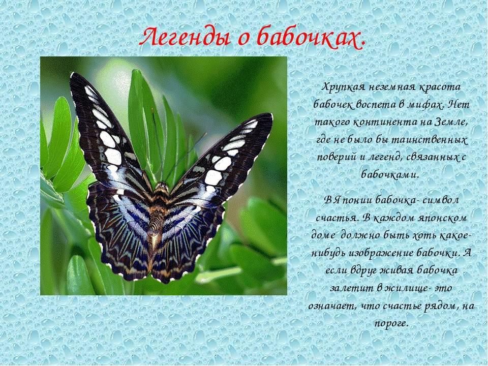 Чудеса из бабочкария | ивановская газета