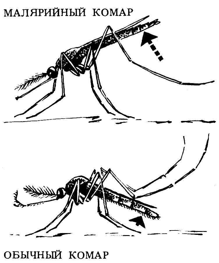 Что будет если укусит малярийный комар и что делать при его укусе?