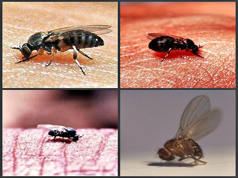 Кто укусил? укусы насекомых на коже человека – фото и описание