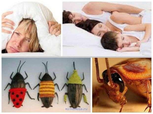 К чему снится таракан. видеть во сне таракан - сонник дома солнца