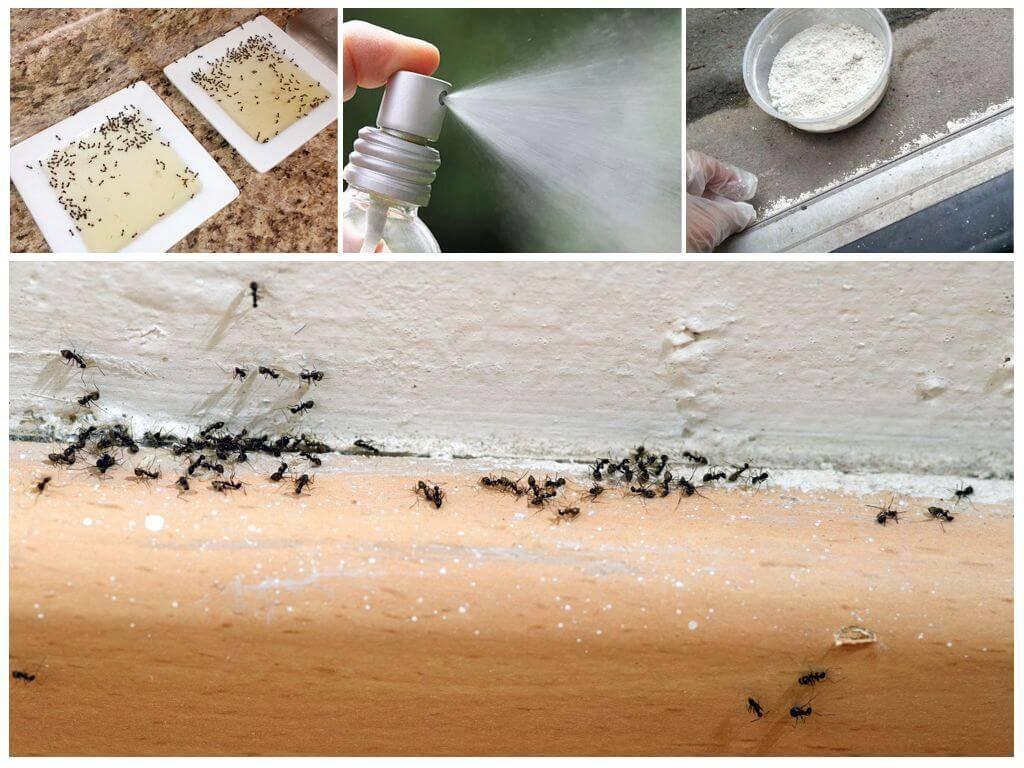 Как избавиться от муравьев в квартире в домашних условиях – womanistka.ru
