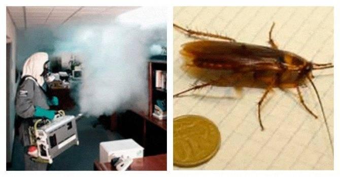 Обработка квартиры холодным туманом от тараканов: отзывы и инструкция