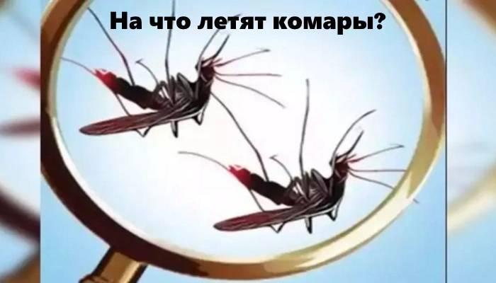 Почему комары видят нас в темноте. как видят комары и что их привлекает к человеку. чем чревато уничтожение этих насекомых