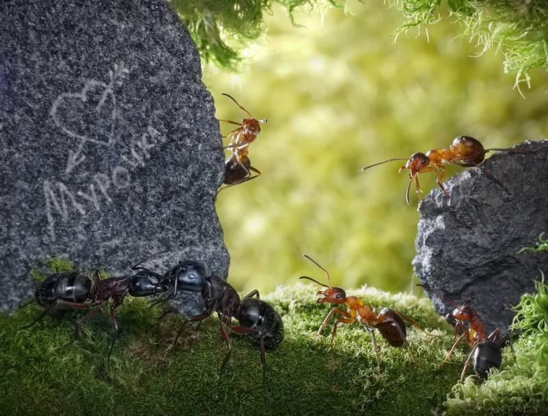 Сколько живут муравьи в зависимости от их вида