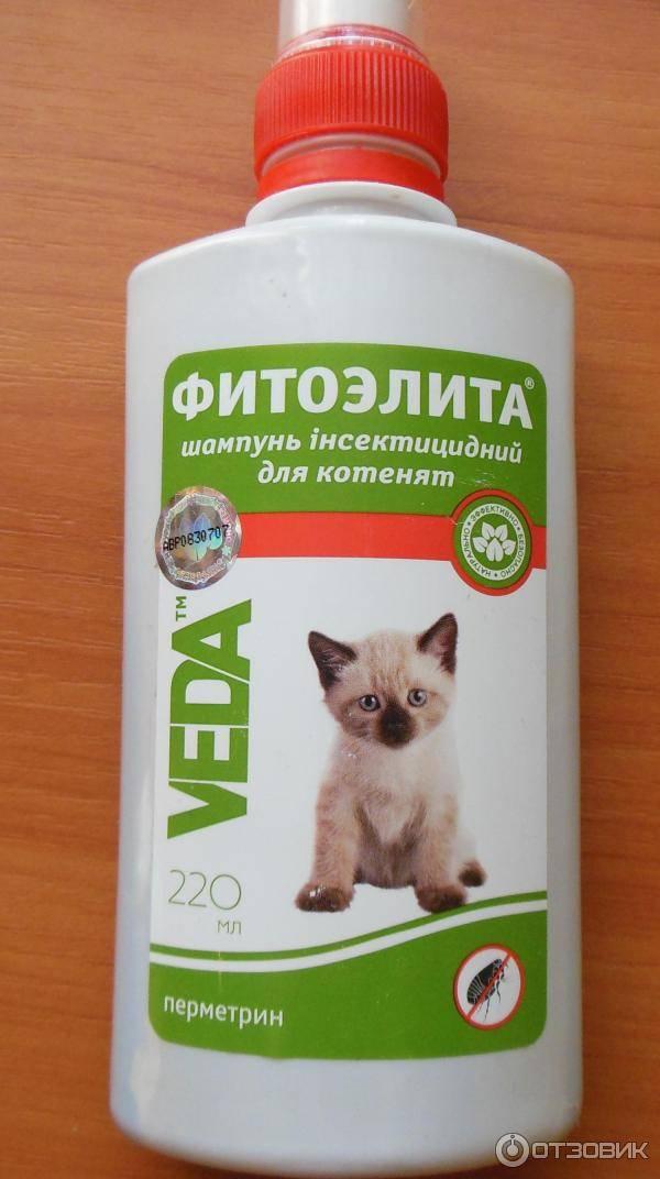 Шампунь от блох для кошек: виды, состав, действие