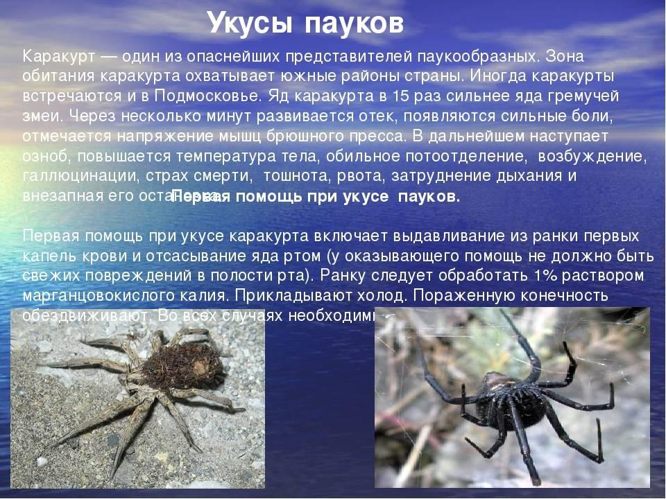 Укус паука: чем он опасен и последствия его укуса