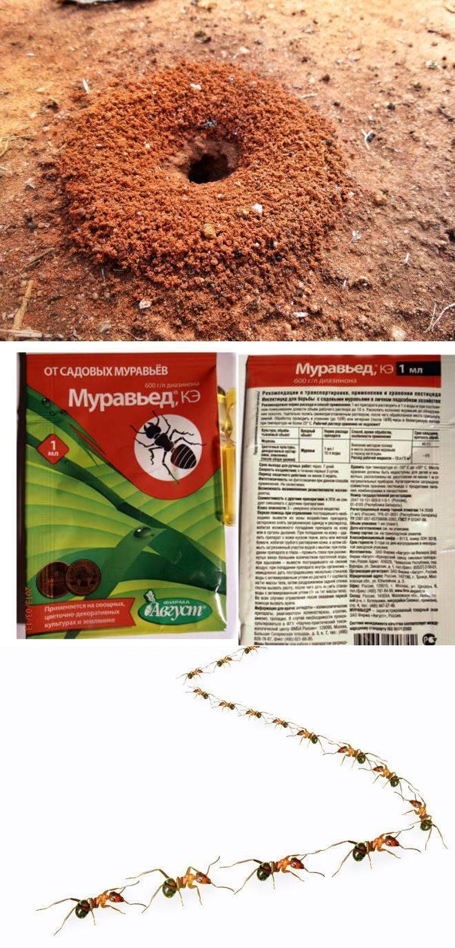 Корица от муравьев: эффективные способы борьбы с насекомыми