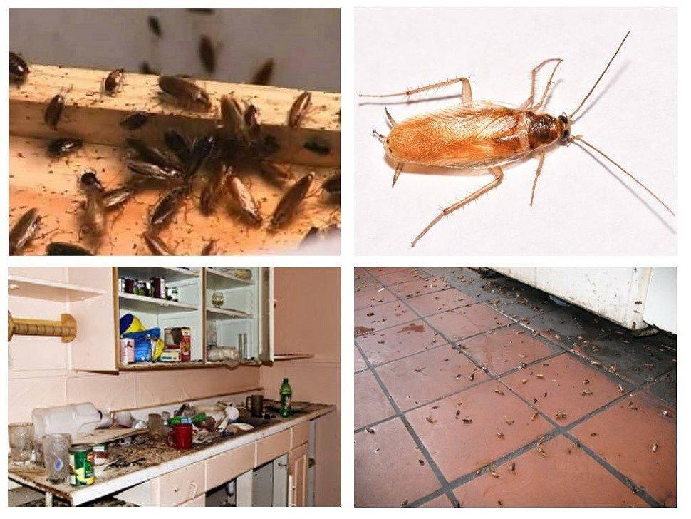 Борьба с тараканами в домашних условиях, самые эффективные способы