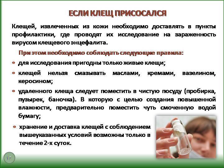 ❶ привики от клещей для собак: топ-3 вакцин по отзывам заводчиков