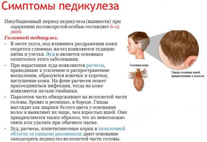 Откуда изначально берутся вши у человека на голове — способы заражения