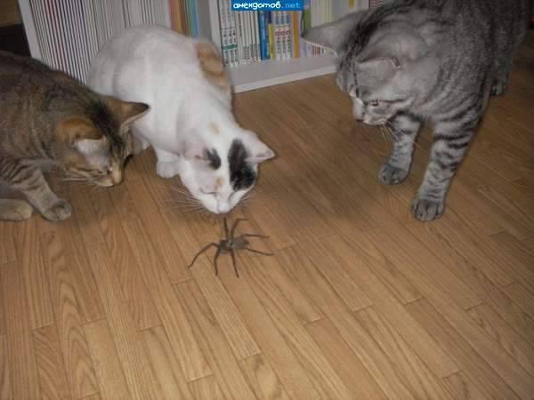 Что делать, если кот или кошка съели муху