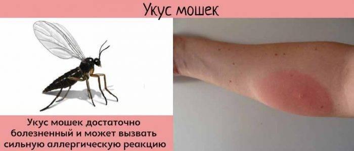 Комар может заразить гепатитом в
