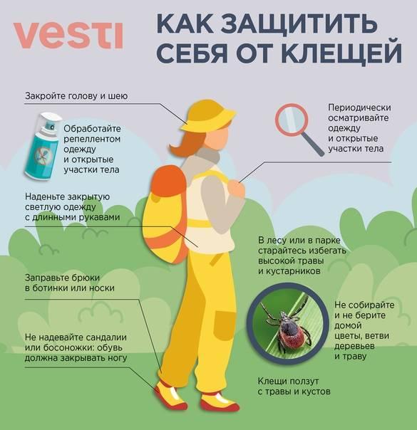 Меры защиты от клещей: подробная инструкция