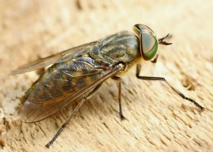 Самые опасные насекомые в россии – список, названия, описание, фото и видео  - «как и почему»