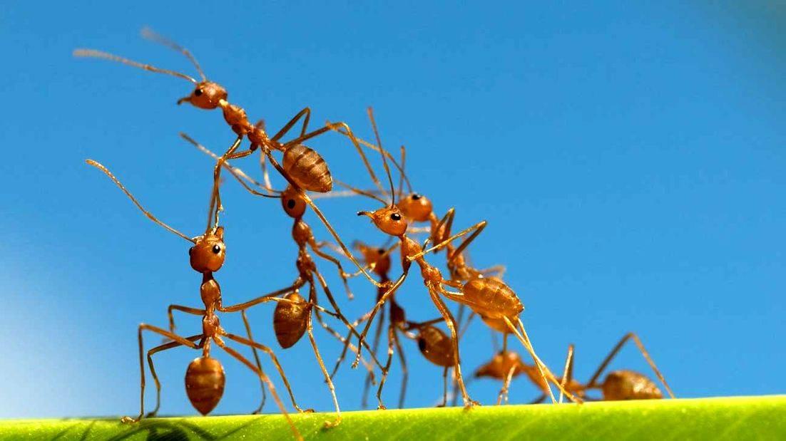 Муравьи – самые удивительные насекомые планеты