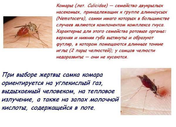 Какую группу крови любят комары?