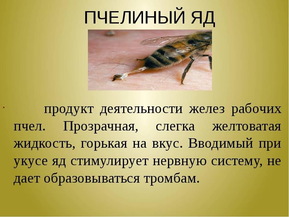 Укус пчелы - яд пчелы (польза и вред)