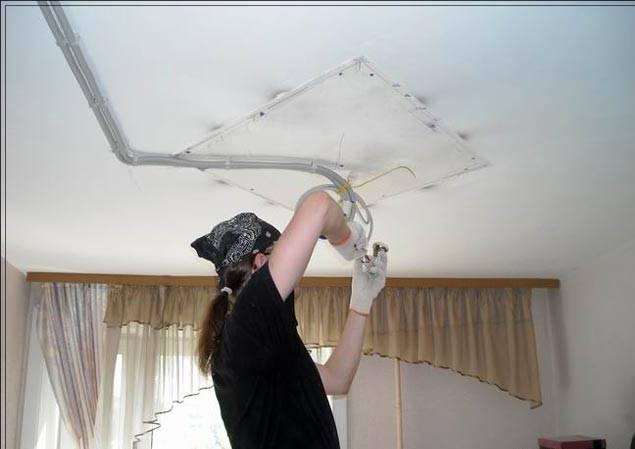 Под натяжным потолком мышь: что делать и как поступить