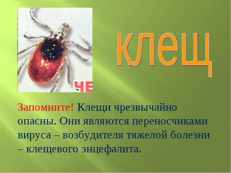 Клещи: виды с фото и описанием, где обитают, чем питаются