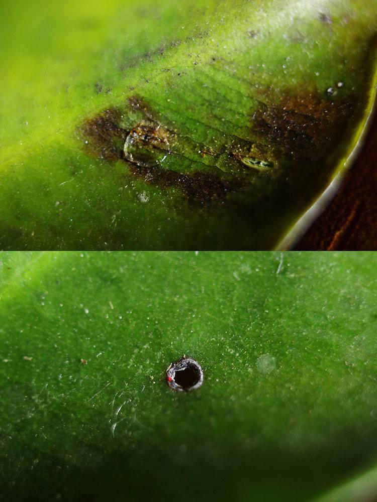 Как избавиться от щитовки на комнатных растениях: способы и рекомендации