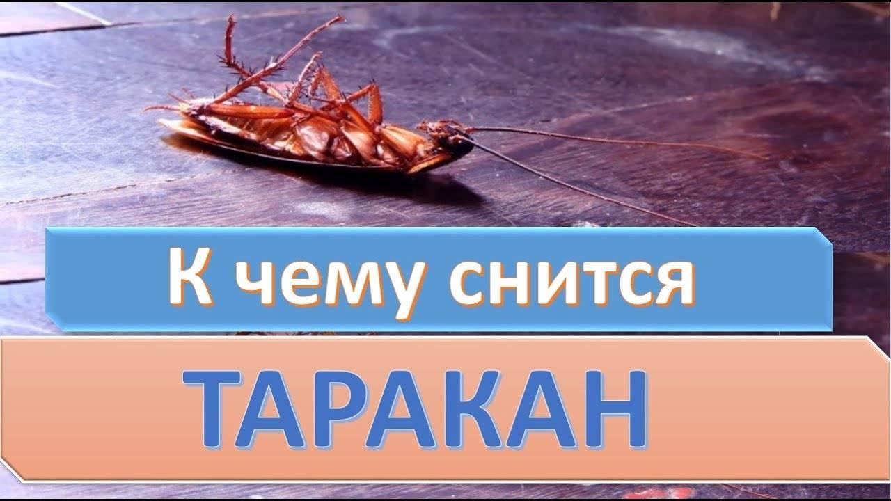 Сонник таракан ? к чему снится таракан во сне