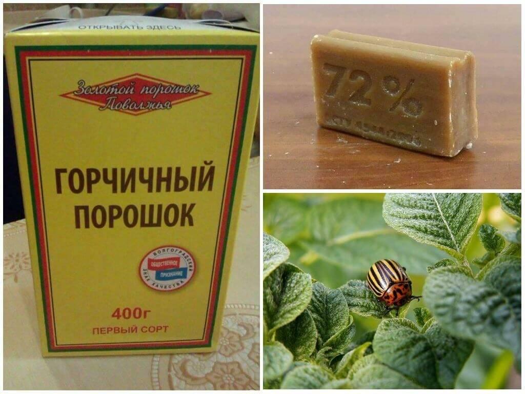Можно ли избавиться от колорадского жука с помощью горчицы и уксуса? | огородник горчица и уксус от колорадского жука — помогут ли эти средства? | огородник