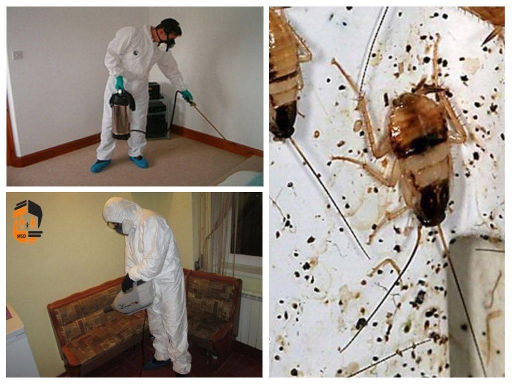 Как подготовить квартиру к дезинсекции от тараканов
