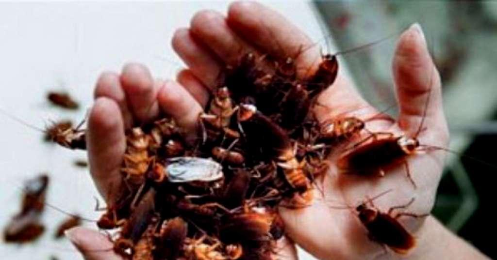 Кто из домашних животных может питаться тараканами? обзор +видео