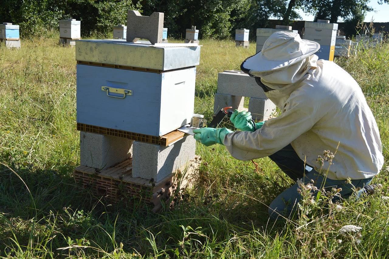 4 способа как лечить пчел от клеща варроа
