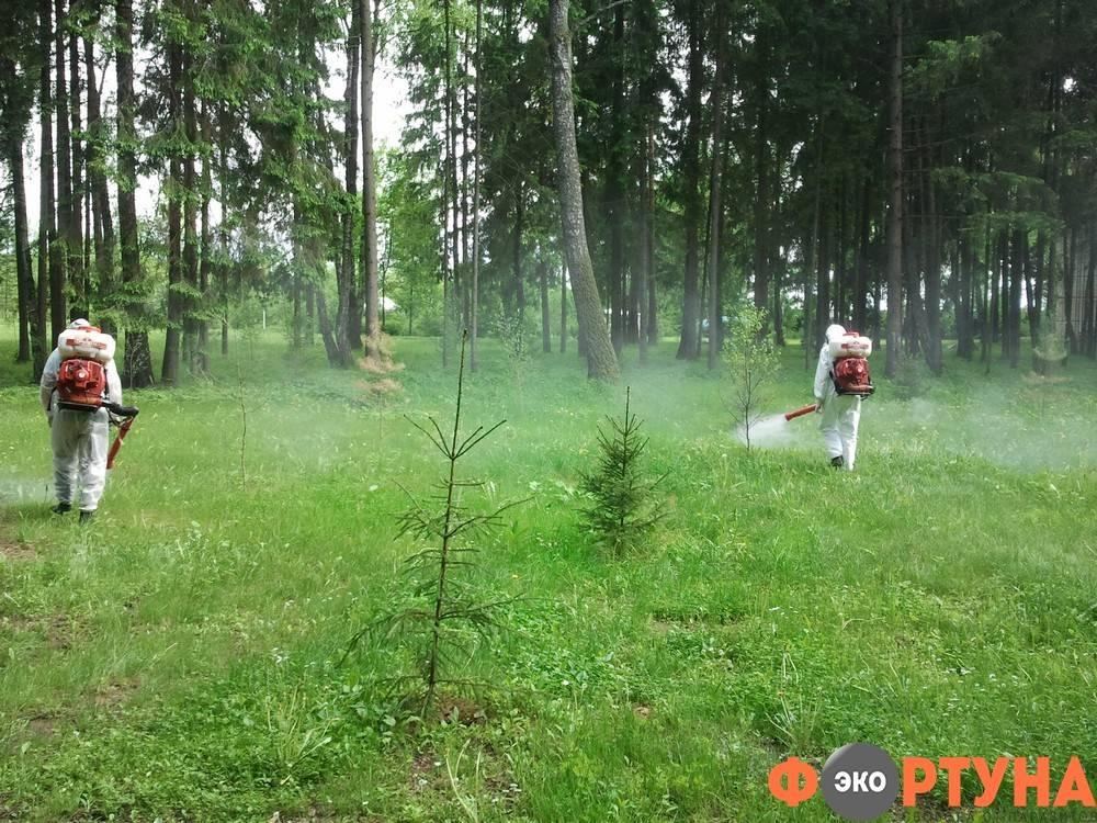 Как избавиться от комаров на участке народными средствами