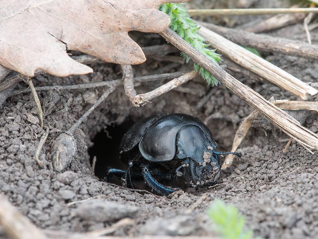 Полезные и вредные жуки в огороде – фото, описания и что с ними делать – дачные дела