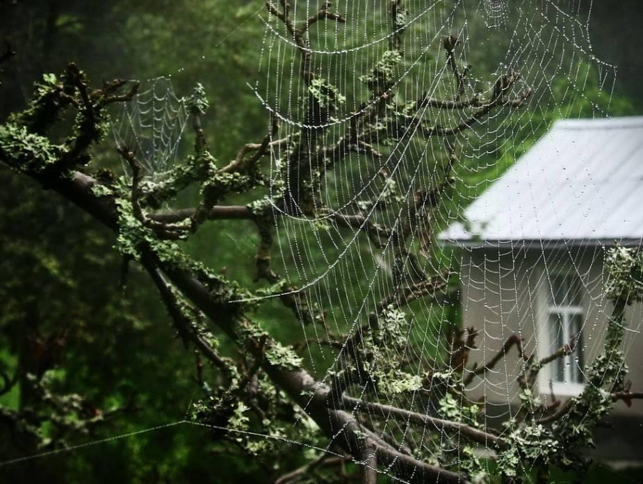 Как избавиться от пауков в частном доме, квартире, на балконе, окнах и в других местах навсегда, советы с фото и видео
