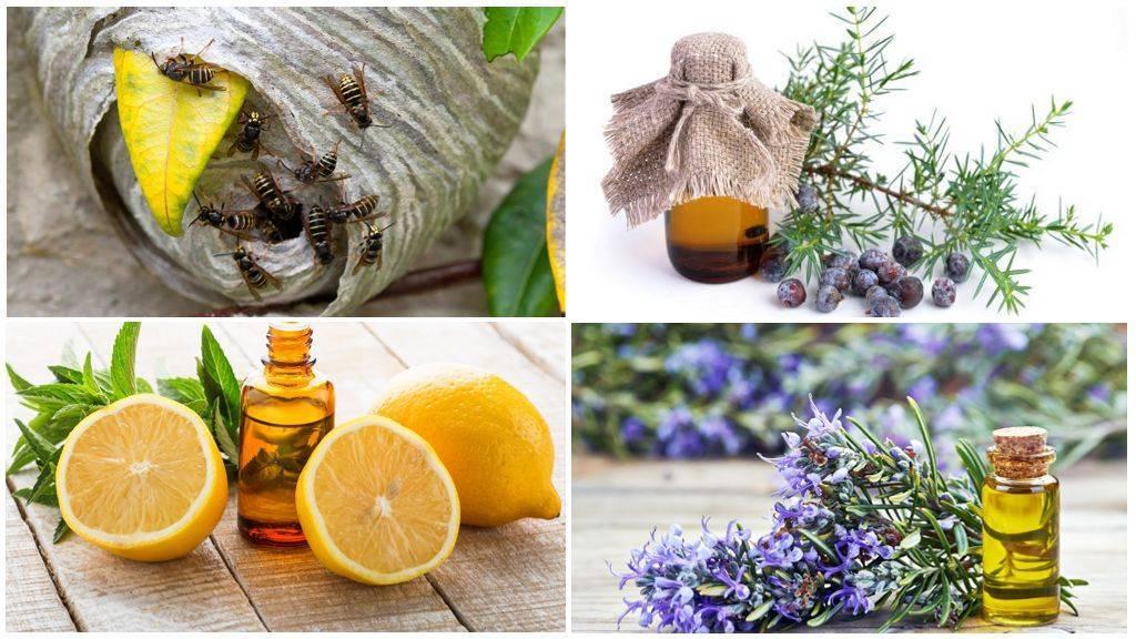 Народные средства от мух: эфирное масло