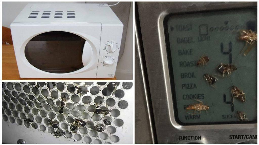 Как быстро избавиться от тараканов в квартире. как уничтожить тараканов в квартире навсегда