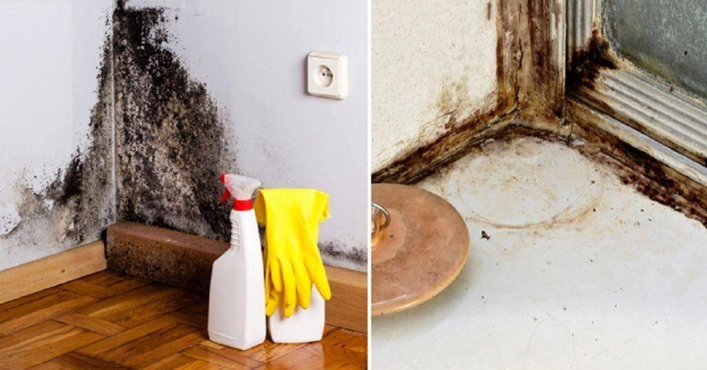 Плесень и грибок на стенах в квартире, частном доме: что делать, как избавиться (средство)