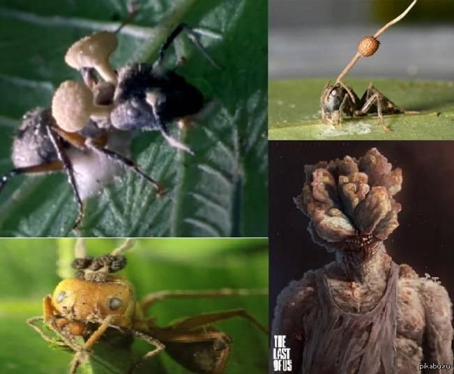 Как грибы-паразиты превращают муравьев в зомби? - hi-news.ru
