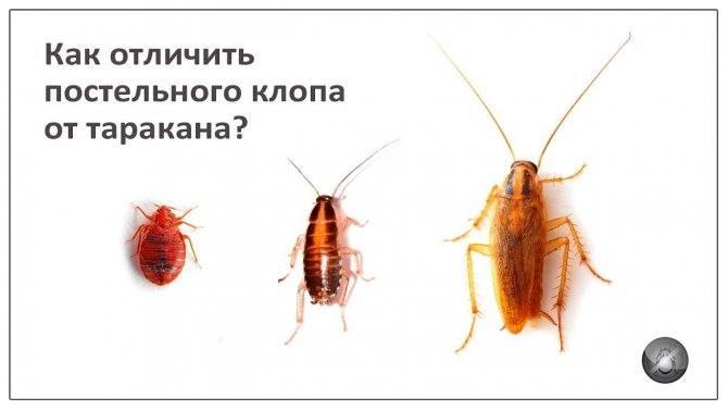 Почему появляются тараканы: причины появления в квартире