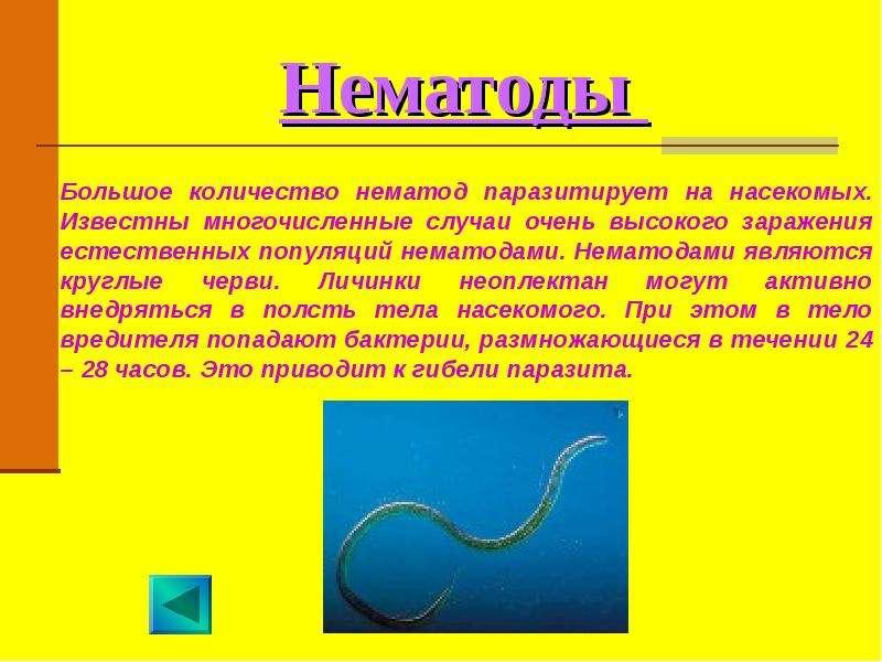 Нематоды разнокожие   справочник пестициды.ru