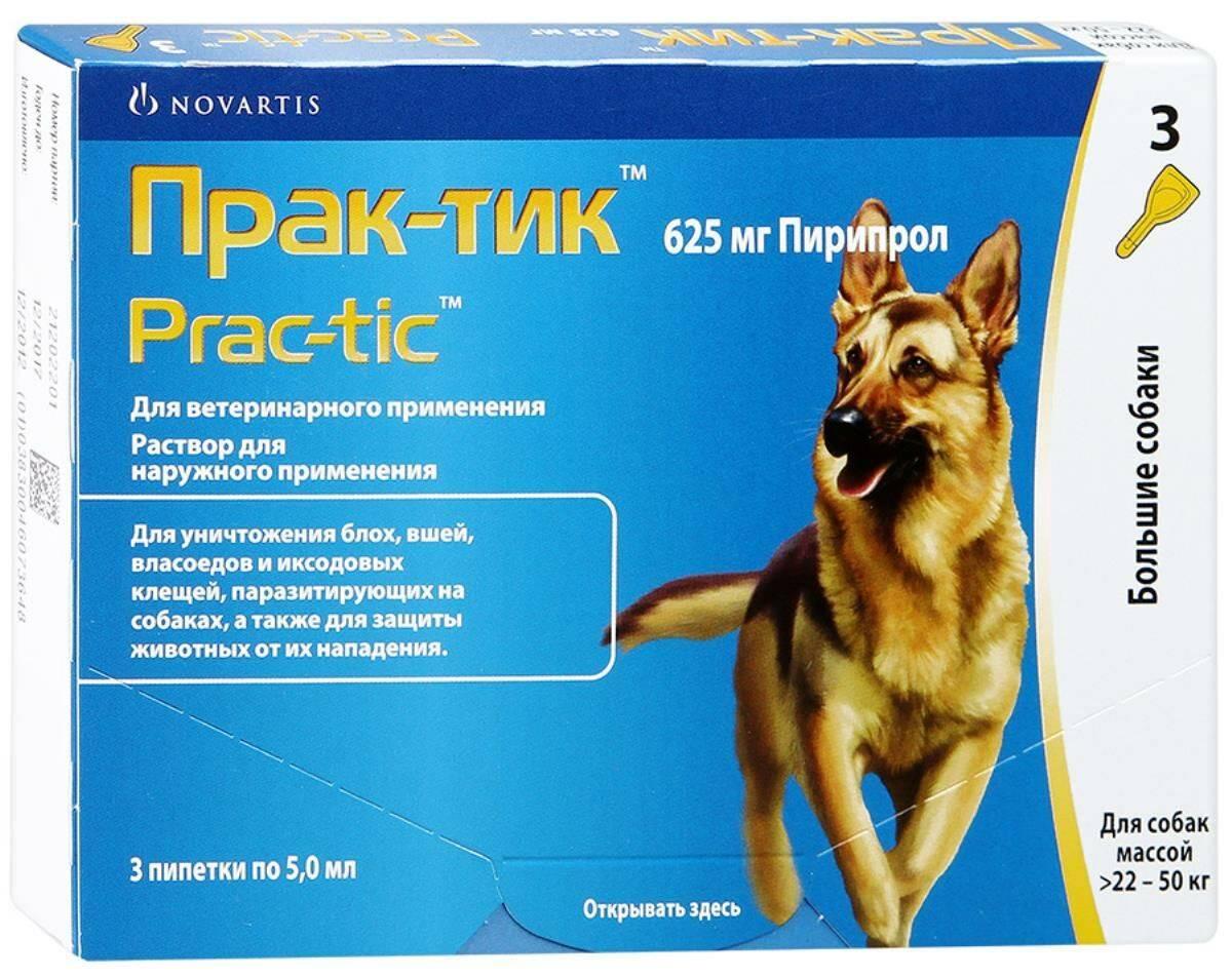 Капли практик от клещей и блох для собак: инструкция по применению и отзывы