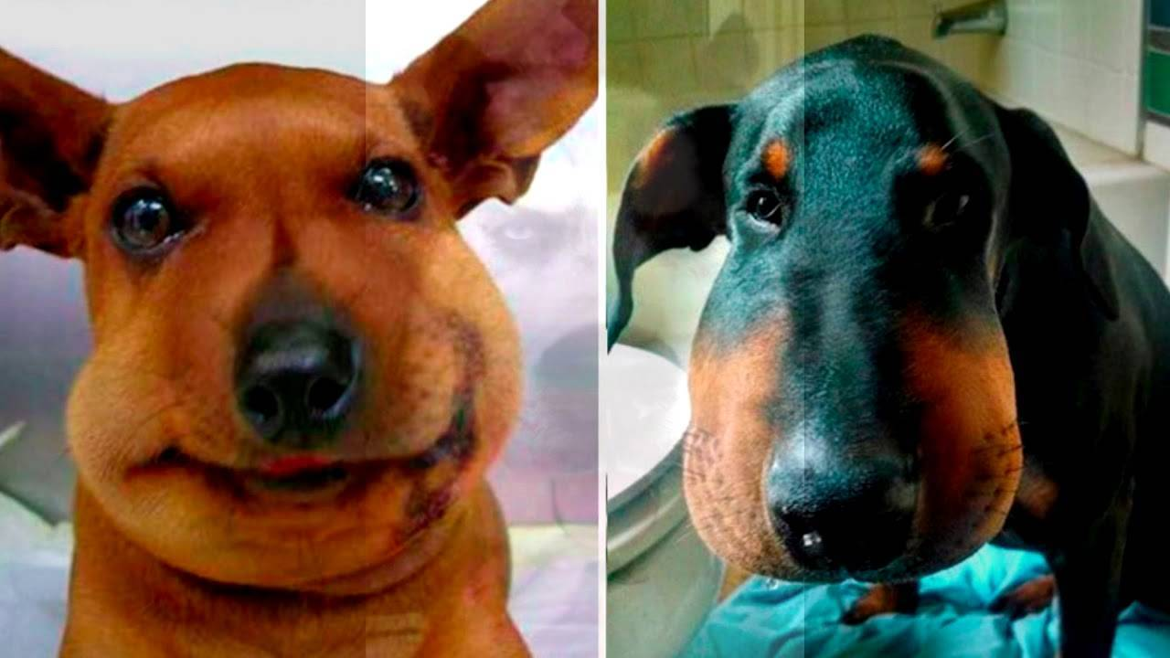 Собаку укусила пчела или оса: первая помощь, лечение собаку укусила пчела или оса: первая помощь, лечение