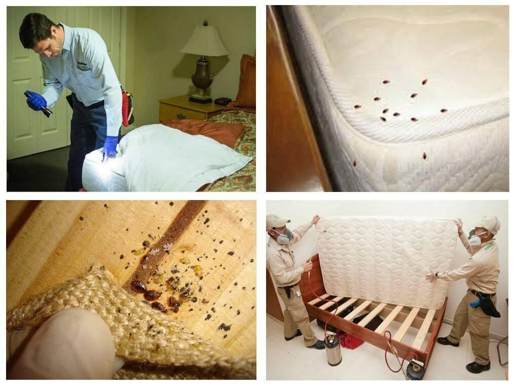 Как избавиться от постельных клопов в квартире: выводим самостоятельно быстро и навсегда, способы борьбы в домашних условиях, фото, видео
