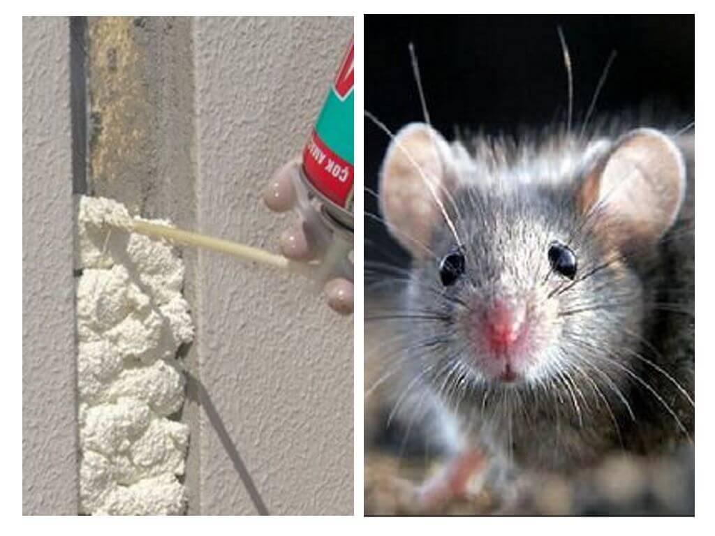 Едят ли мыши монтажную пену: зачем грызут, чем заделать дыры, чтобы избежать проникновения грызунов