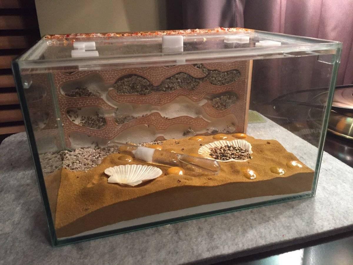 Как завести муравьев в доме, или что такое формикарий